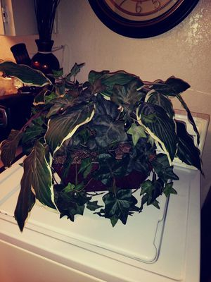 Big fake house plant for Sale in Fresno, CA