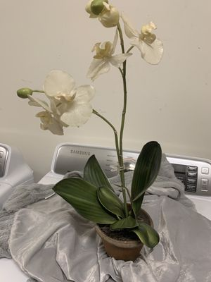 Artificial Orchid for Sale in Brentwood, CA