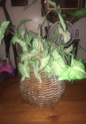 Decorative Plant for Sale in Fresno, CA