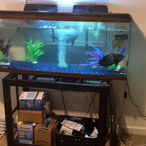 55 gallon aquarium for Sale in Fort Meade, MD
