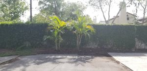 Two palm trees - FREE for Sale in Aloma, FL