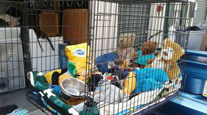 Dog kennel only°° for Sale in Chula Vista, CA