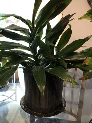 House plants for Sale in Aurora, CO
