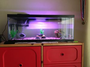 Aquarium For Sale (20G Long, Aqueon Filter, Hinged Glass Top) Included for Sale in Woodside, CA