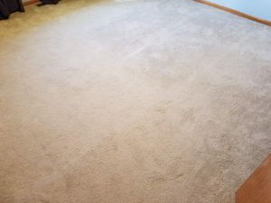 Free carpet for Sale in New Lenox, IL