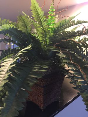 Artificial fern plant for Sale in Lake Elsinore, CA