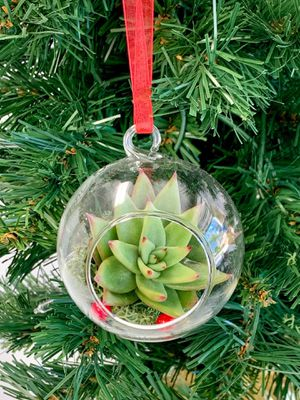 Live Succulent Terrarium Christmas Ornament for Sale in Kolin, LA