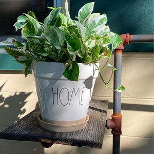 Rae Dunn Home Potted Plant for Sale in Orlando, FL
