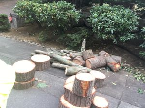 Small free fire wood delivery Now .. for Sale in Bellevue, WA