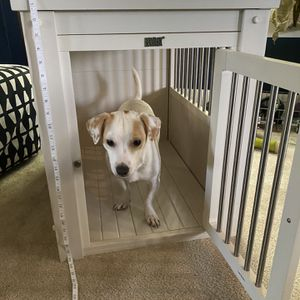 Ecoflex Dog Crate for Sale in Milwaukie, OR
