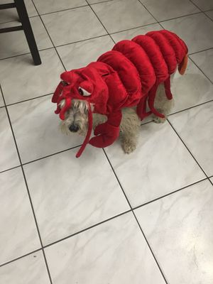 Dog Halloween Costume Lobster for Sale in Hialeah, FL