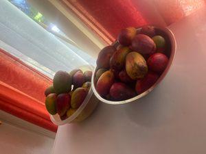 Sweet mango 🥭 for Sale in Delray Beach, FL