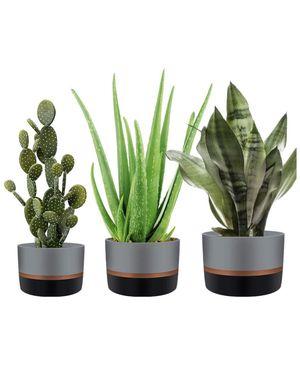 NEW!! Cement Succulent Planter Pots Concrete Cactus Planter Mini Plant Pot Flower Pots with Drainage Hole and Removable Rubber Mat, Set of 3 (Gray Pl for Sale in Los Angeles, CA