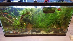 Aquarium plants fresh water for Sale in Laguna Beach, CA