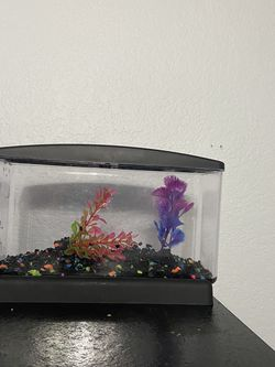 1/2 gallon betta fish tank for Sale in Fontana,  CA