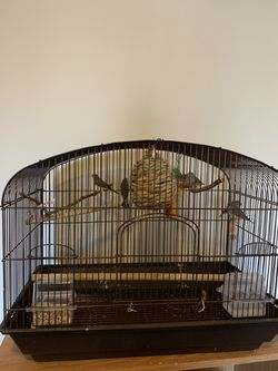 Large Cage ALarge Accessories, 7 Zebra Finches (2 Adults 5 Babies) for Sale in Indianapolis,  IN