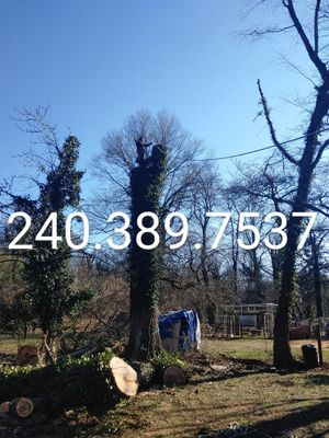 Tree Removal and stump removal DMV for Sale in Montpelier, MD