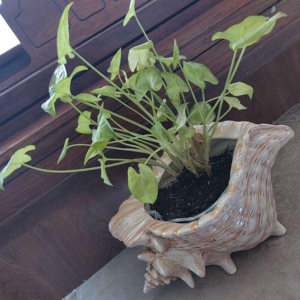 Planta natural..
