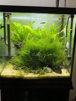 30 Gallon Square Aquarium Fishtank Bundle for Sale in San Diego,  CA
