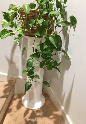 White wooden plant holder column . for Sale in Everett, MA
