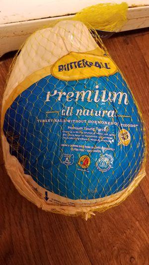 Turkey free for Sale in Houston, TX