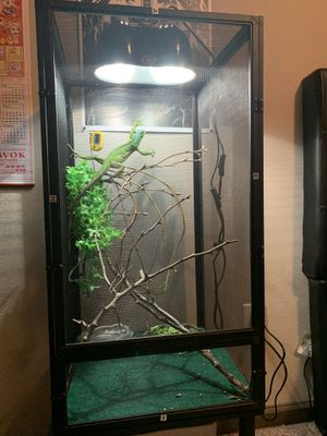 Iguana and cage for sale! for Sale in Brandon, MS