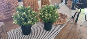 2 fake plants for Sale in Lakeside, CA
