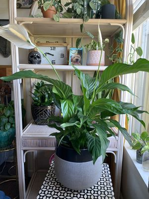 """LARGE 10"""" POT WITH DRAINAGE for Sale in San Diego, CA"""