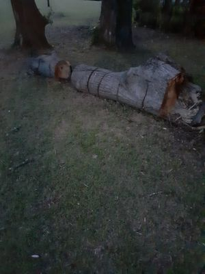 Firewood FREE!!! for Sale in Lowndesboro, AL