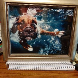 Underwater boxer Diving Photo Framed for Sale in Griffith, IN