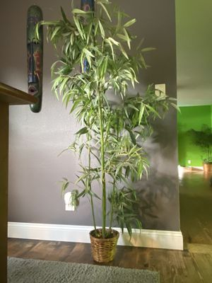 Fake indoor bamboo plant for Sale in Eustis, FL