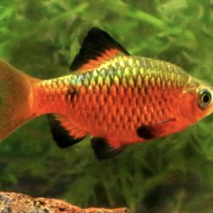 Aquarium Fish for Sale in Auburndale, FL