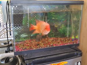 Aquarium a 20 gallons no issues nice including a big fi3 red evil for Sale in San Diego, CA