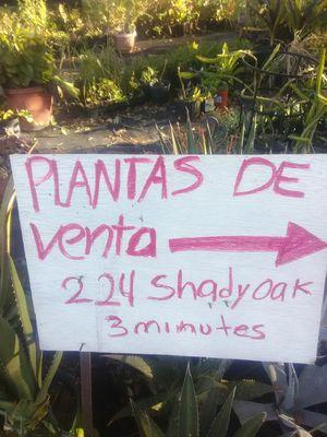 Variedad de plantas for Sale in Adkins, TX