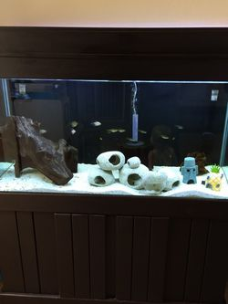 100 Gallon Tank, Decorations, And A Fluval FX6 Canister Filter $1100 OBO for Sale in Glendale,  AZ