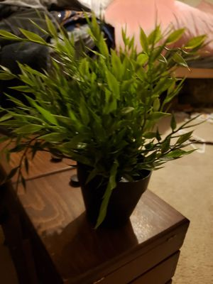 IKEA plant 2 for Sale in Colorado Springs, CO