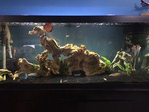 Fish tank for Sale in Farmingdale, NY