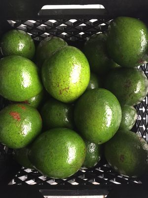 Organic Avocados for Sale in Fort Lauderdale, FL