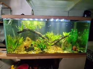 Aquarium fish tanks for Sale in Vista, CA