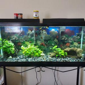 55 Gallon Fish Tank for Sale in Fife, WA