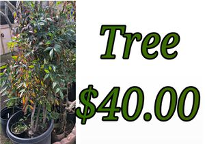 Tree for Sale in Hacienda Heights, CA
