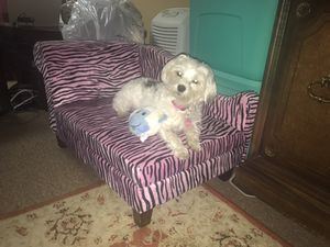 Dog Bed / chaise lounge for Sale for sale  Sayreville, NJ
