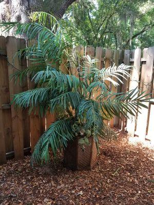 Palm tree decor for Sale in Jacksonville, FL