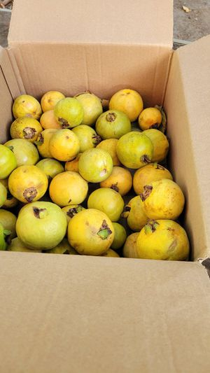 Guavas no holds free for Sale in Long Beach, CA