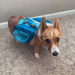 Dog Backpack for Sale in Sarasota,  FL