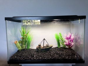 10 gallon fish tank for Sale in Pompano Beach, FL