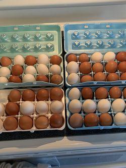 Fresh Eggs for Sale in Port Charlotte,  FL