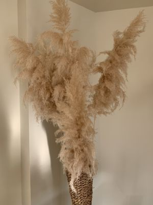 Large pampas for Sale in Los Angeles, CA