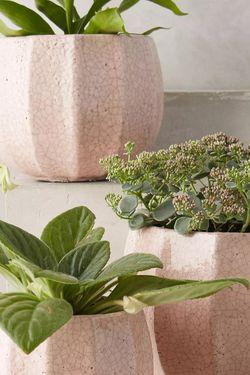 Arthropology Indoor Plant Pots for Sale in Germantown,  MD