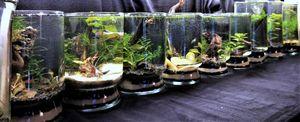 Mini Aquascape Aqurium for Sale in Riverdale, GA